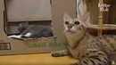 Two Cats Fight To Be The Mom Of Kittens Kritter Klub