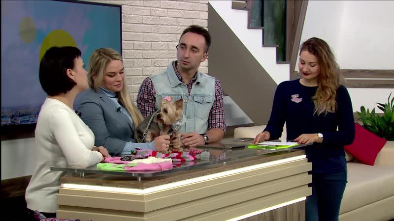 Про одежду для домашних питомцев говорили с Еленой Губановой и Натальей Мокроусовой (Липецк)