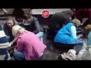 В Пскове волонтеры спасают собак которым кто то связал лапы и залил гудроном Это и плохая и хорошая новость одновременно Хор