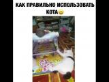 как правильно использовать кота