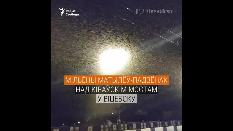 Мільёны матылёў падзёнак ляцяць на ліхтары ў Віцебску