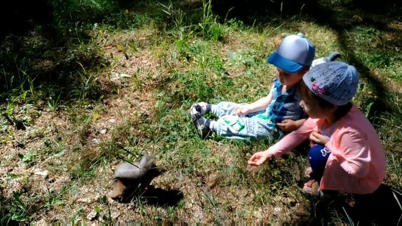 Белки и утки парка Гагарина