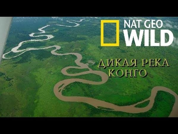 Nat Geo Wild: Дикая река Конго (1080р)