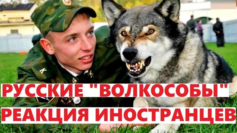 Русские ВОЛКОСОБЫ- таинственный гибрид , защищающий наши границы! КОММЕНТАРИИ ИНОСТРАНЦЕВ
