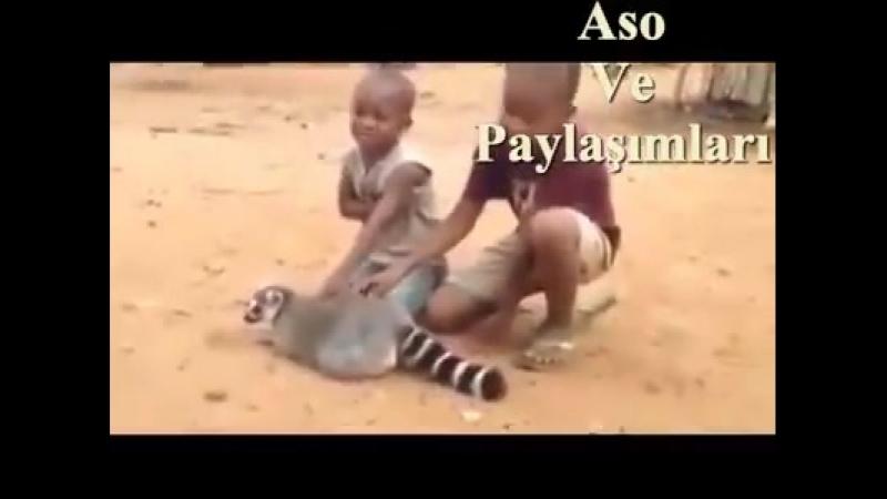 Video, Kürtçe Dublaj Kuro Celo Te Goşte Paramın Xariye,, duration 58 seconds