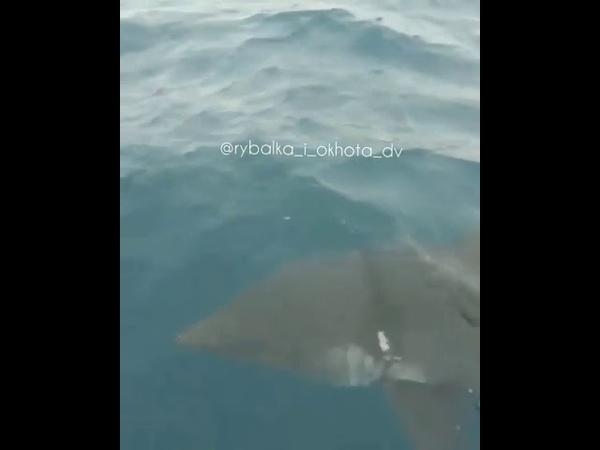 DEITA.RU Акула кружит вокруг лодки, Приморье