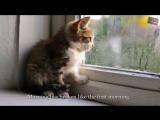 Американский автор песен Cat Stevens