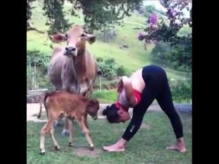 Когда йогинишь вместе с животными, который тебя любят козой, коровами, собакой и свиньей
