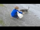 Galinha x gato
