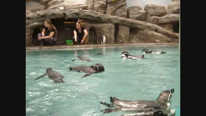 Пингвины 14 нояб