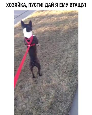 """Видео on Instagram: """"Кажется, у вас собака сломалась 😂"""""""