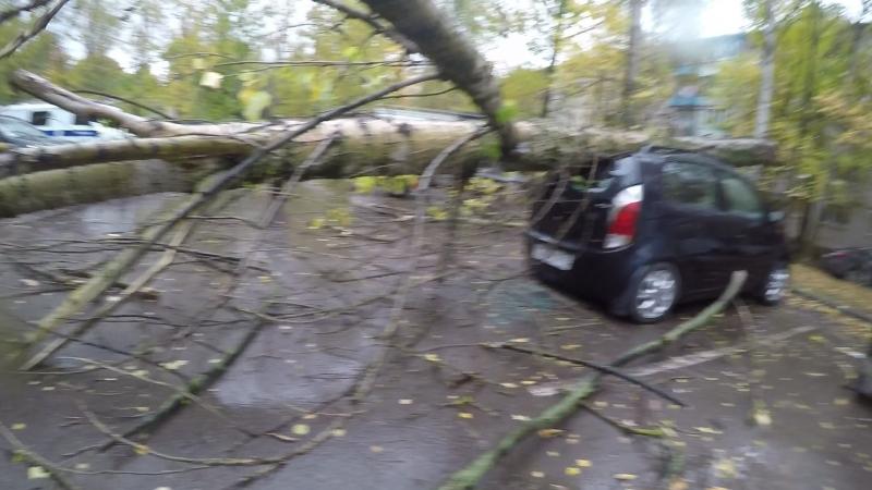 Зрелое дерево упало на Chery в Ярославле