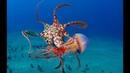 Top Best Sea Animal Attack Compilation | Shark, eel, Octopus, Batoidea, Sea Snake, Piranha, Pike HD