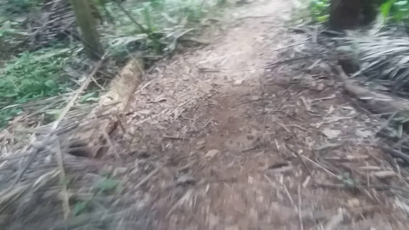 Муравьиная дорога в джунглях