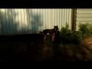Эффект фото/видео съмки для отпугивания собак