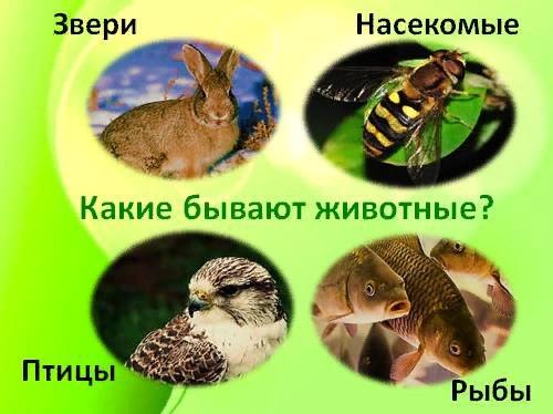Разница между зверями и животными
