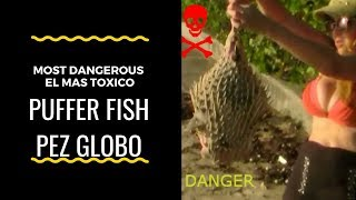 🔴Must know can kill you Pufferfish pez globo 河豚 鰒 フグ 복어 복