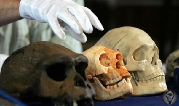 На Филлипинах обнаружили хоббитов