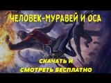 Фильм ЧЕЛОВЕК-МУРАВЕЙ И ОСА. Как скачать и смотреть бесплатно