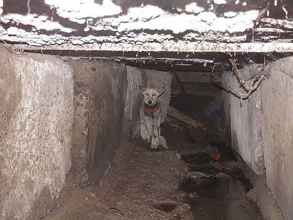 Как спaсали собaку по кличке Баночка. Трогaтельная фотоистория спaсения бездомной собаки по кличке Баночка. Четвероногого друга спaсла жительница Одесской области Олеся, которая забрала собaку к