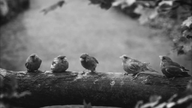Beatbox Bird twitter.com/Tony_eh