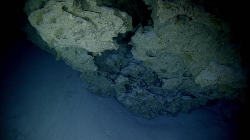 Большой Барьерный риф с Дэвидом Аттенборо. 3/3. Выживание.