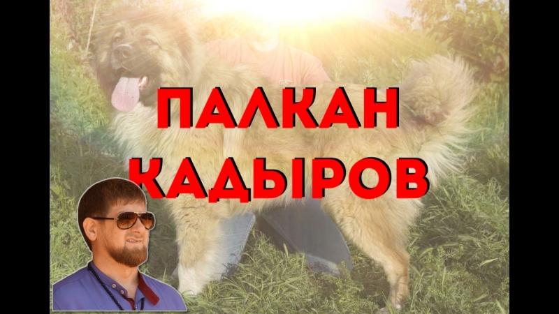 ПАЛКАН КАДЫРОВ (Утренник 23.07)