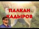 ПАЛКАН КАДЫРОВ Утренник 23 07