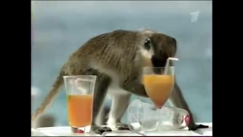 Выпивайте в меру😉
