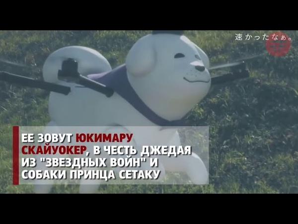 Необычный талисман японского города Одзи — летающая собака-дрон