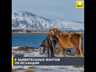 8 удивительных фактов об Исландии