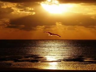 ENIGMA - THE DREAM OF THE DOLPHIN