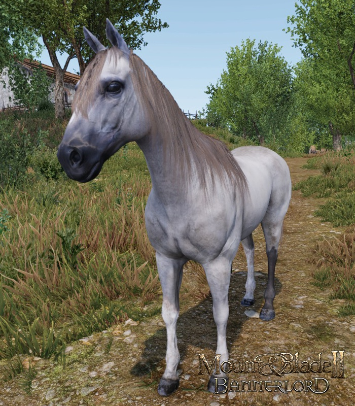 Mount & Blade 2 II: Bannerlord. Блог Разработчиков 97. Породы лошадей