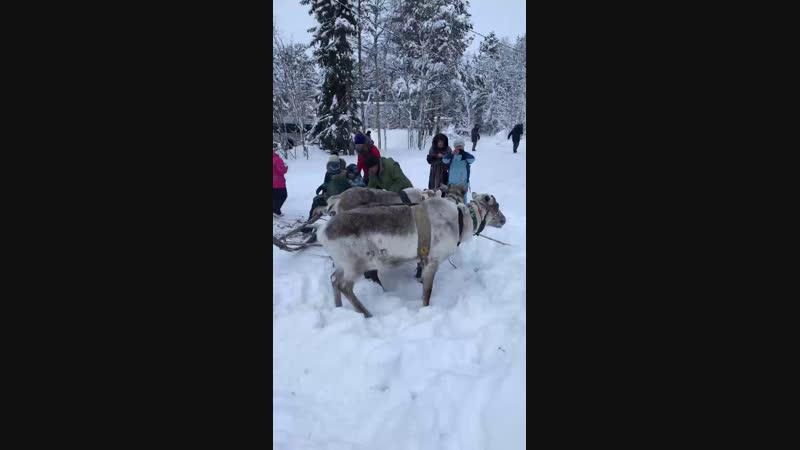 Live ГОБУ Центр народов Севера