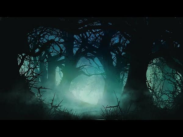 Celtic Instrumental Music Darkwood Forest