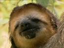 Ленивец: Седьмой смертный грех / Sloth: The 7th Deadly Sin / 2001
