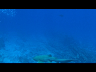 Чек дайв на Shark-Yolanda. Отвлекаться на акул нельзя.