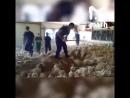 Пресс служба птицефабрики Евродон утверждает что это видео вы не видите Это провокация и вас подводят ваши глаза Ну все