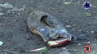 НКН. Трагедия в Марьевке: мать и дочь погибли под огнем украинских боевиков (18+)