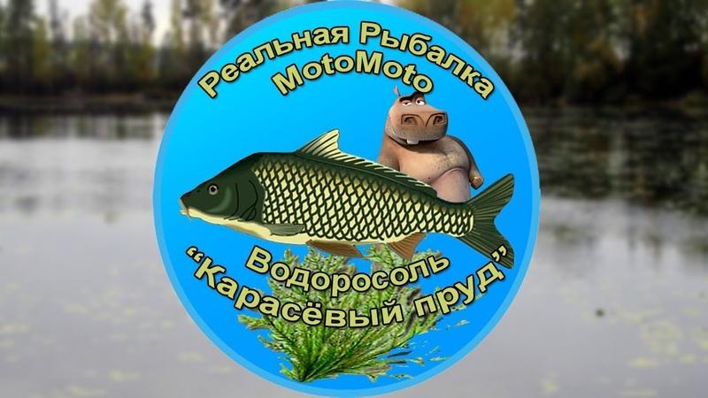 Как поймать Водоросоль на Карасёвом пруду | Реальная Рыбалка