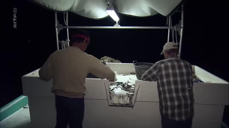 360 Geo - Les derniers pecheurs de crevettes de Louisiane см