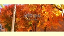 영주, 소소한 가을날의 일상 | autumn Daily Vlog ( iphone xs)