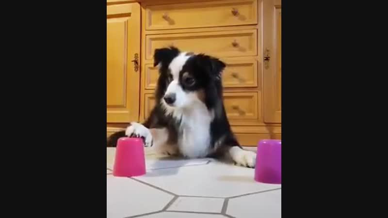 Хороший пёсик