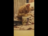 Сильва пьет кефир