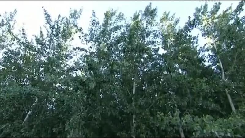 Как выращивают супер деревья؟