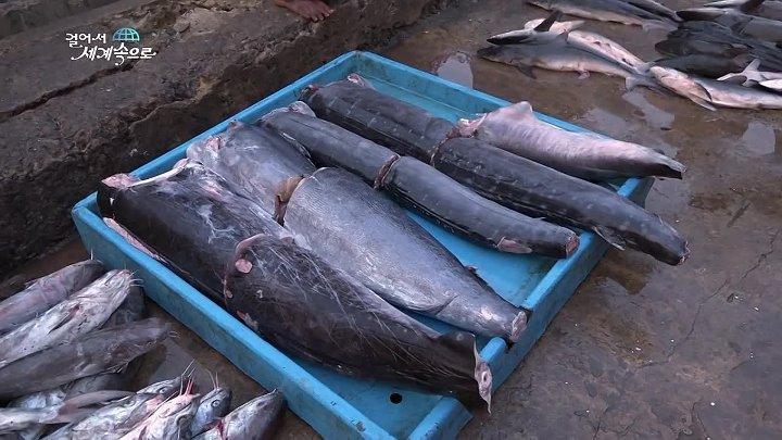 【K】Sri_Lanka_Travel-Weligama_ _Port_Fish_
