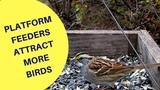 Platform Feeders Attract More Birds