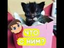 Этот котёнок настоящий борец!