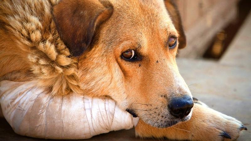 Парень нашел собаку на обочине дороги... Пёс лежал на обочине грязный и всеми брошенный...