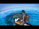 YBS Catch And Cook Ep 3 - CLEAREST WATER EVER + Big Tiger Shark, Hammerhead Shark and Rankin Cod